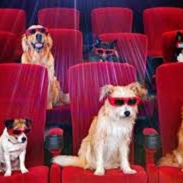 Dogs at the Movies? (1-23-19)