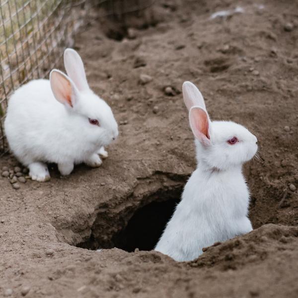 045: The Rabbit Hole artwork